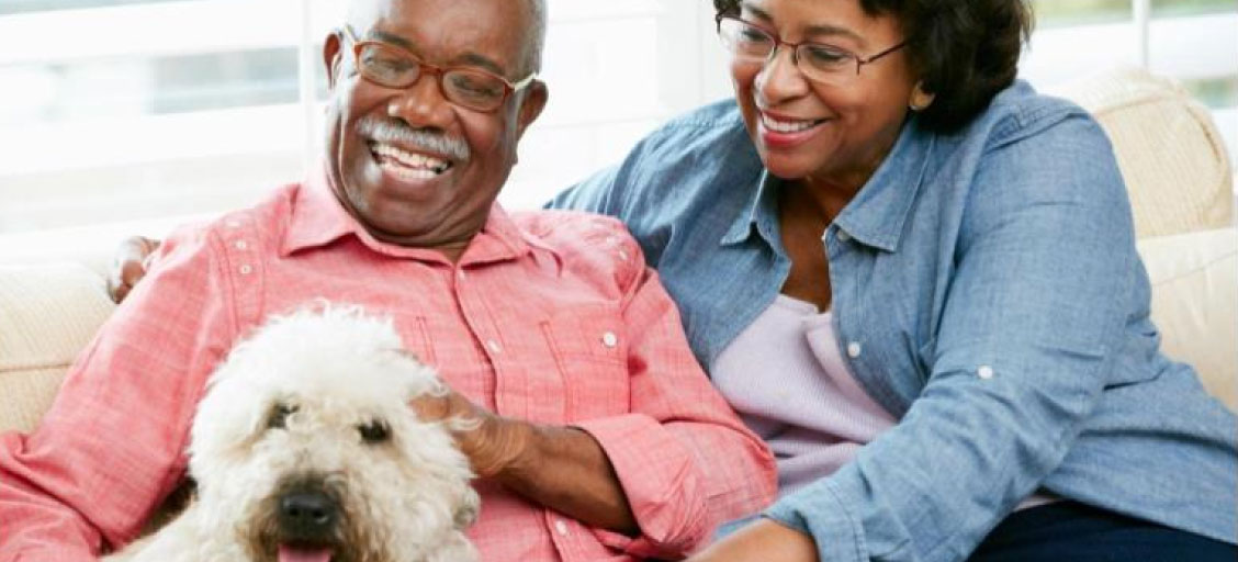Cosmos uncovers what pet owners want and need with Momentive