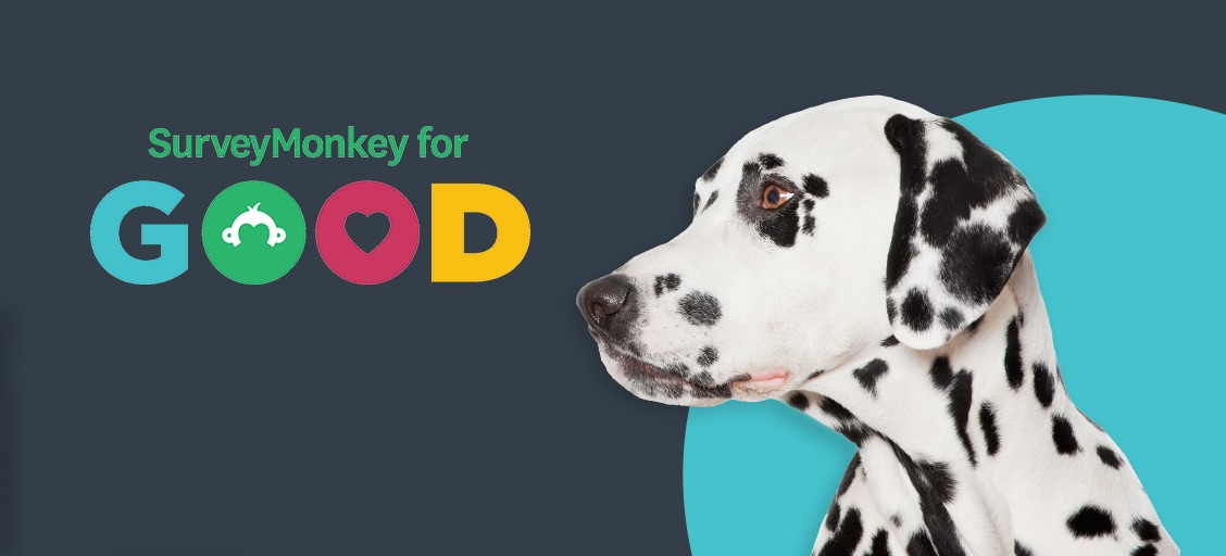 How SurveyMonkey for Good helps animals find safe, loving homes with the Humane Society of the United States