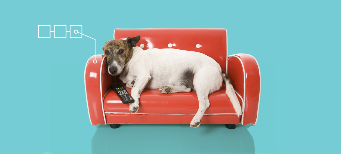 Who make the best Netflix binge buddies? 71% say it's their pets