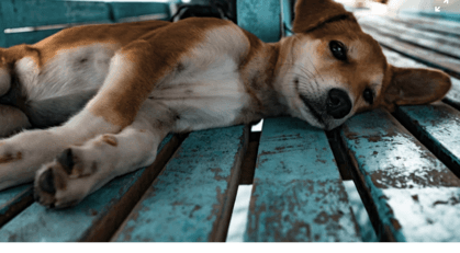 Dog laying on a bench